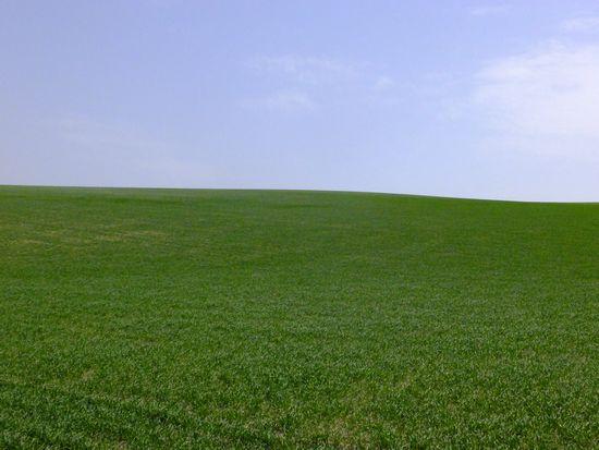 麦畑と空.jpg